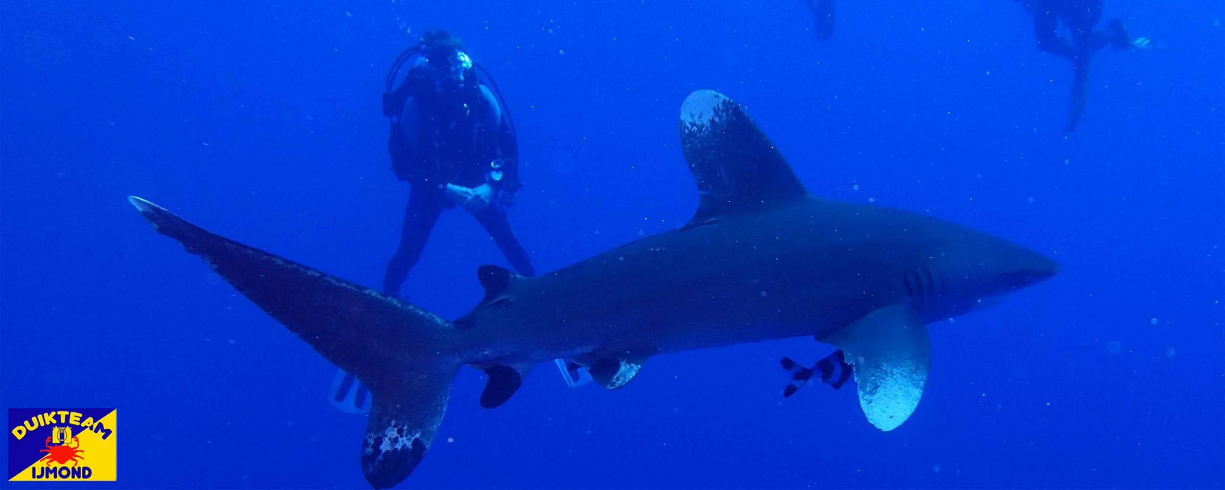 duikteam ijmond duiken met haaien in de rode zee