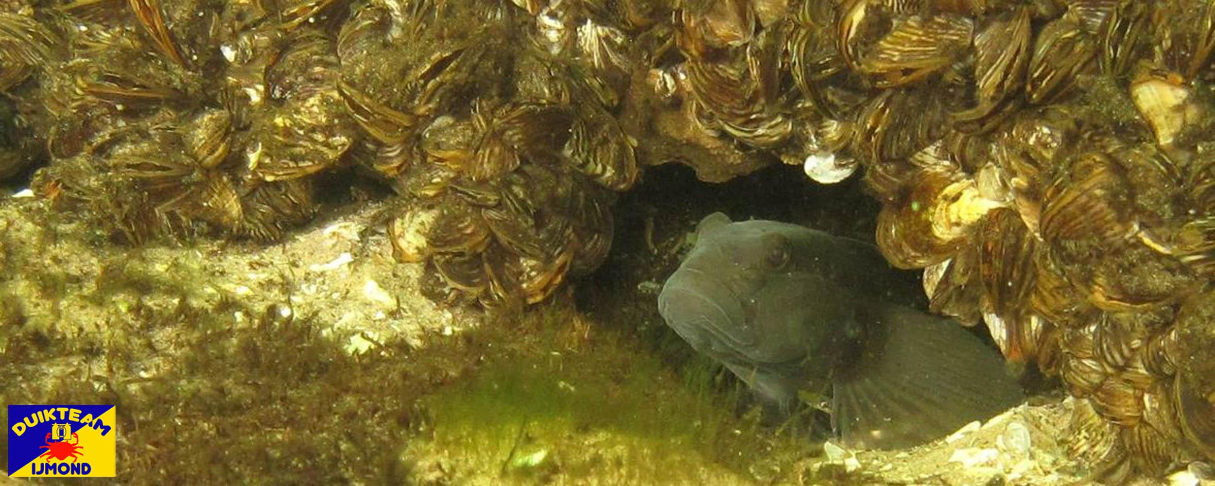 duikteam ijmond duiken in de Spiegelpolder